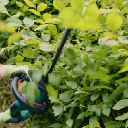 trim back the hedge for a straight edge