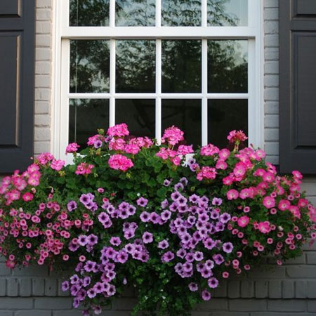 diy colourful window boxes