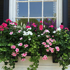 install colourful window box