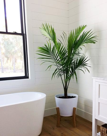 HOME DZINE Bathrooms | Add some green to your bathroom