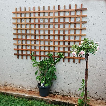 diy trellis for creepers or climbers