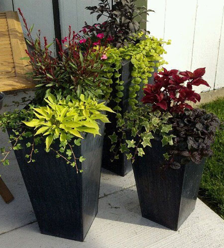 potted plants for garden decoration