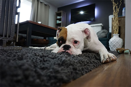 carpet cleaning for pet stains