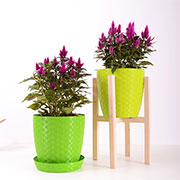 grow house plants