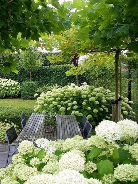 Home Dzine Garden Ideas Indigenous Trees For A Small Garden