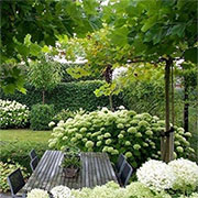 best trees for small garden