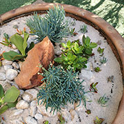 succulents are water wise and low maintenance