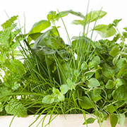 how to grow kitchen herbs