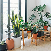 what you should know about indoor gardening