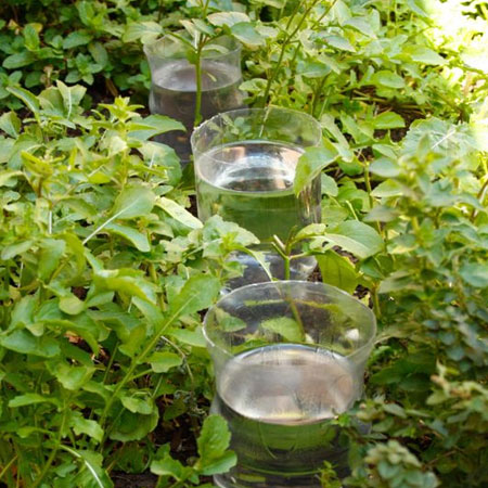 recycled plastic bottles water irrigation for garden