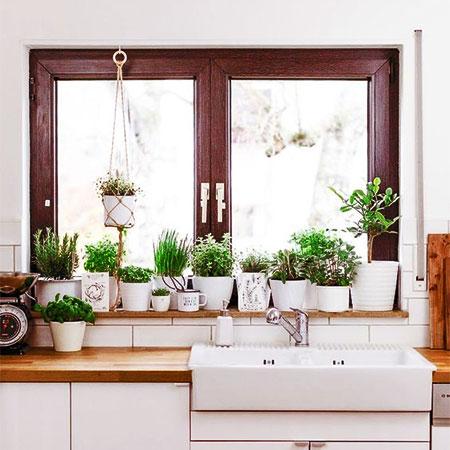 Herbs To Grow On A Sunny Kitchen Windowsill
