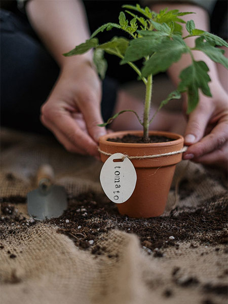 How to use Grolite® for Home Growing
