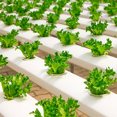 Grolite® is ideal for hydroponics