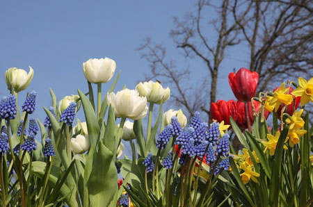 when to plant spring flowering bulbs