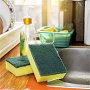 kitchen sponges harbour bacteria