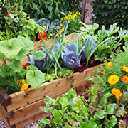 companion planting for vegetables