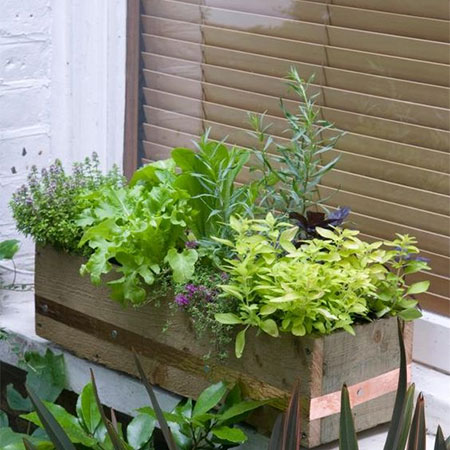 How to Establish a Kitchen Herb and Salad Garden