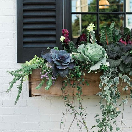 grow herbs and salad greens in windowbox
