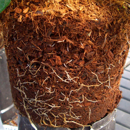 add coco peat or coco coir to soil
