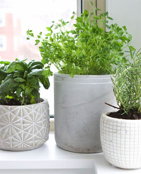 Plants To Grow Indoors To Repel Houseflies