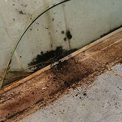 how to get rid of black mould