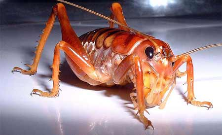 Home Dzine Lifestyle Eco Pest Repellents