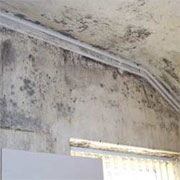 Do you have damp or mould?
