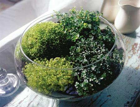 Home Dzine Craft Ideas Make A Herb Or Plant Terrarium