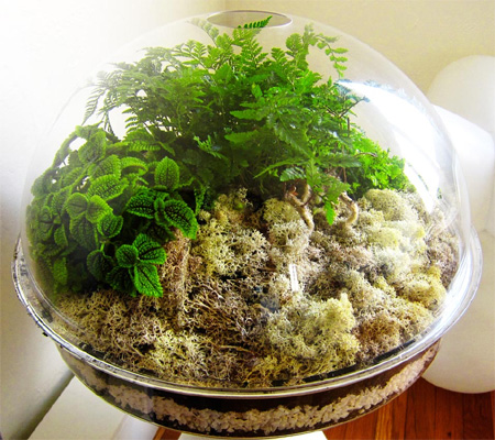 Home Dzine Craft Ideas Make A Herb Or Plant Terrarium