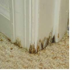 Home Dzine Home Diy Prevent Damp And Mould