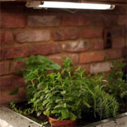 Grow fresh herbs in your kitchen