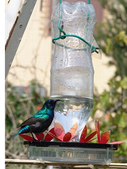 to wonderhowto homemade feeder how pigeon hand feed birds bird baby a
