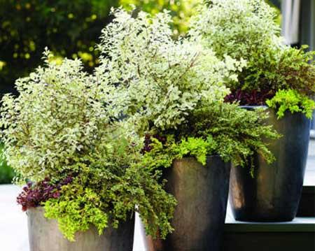 Potted Garden Plants Home dzine garden great ideas for pots great ideas for pots workwithnaturefo