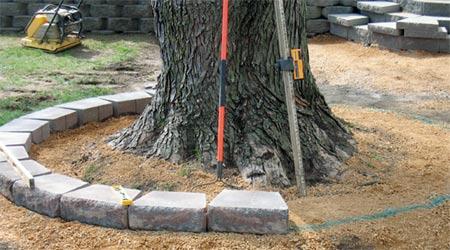 HOME DZINE Garden   Building a tree ring