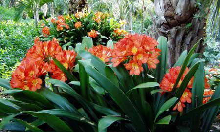 Plants For A Shade Garden