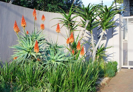 Indigenous Water Wise Low Maintenance Garden Design